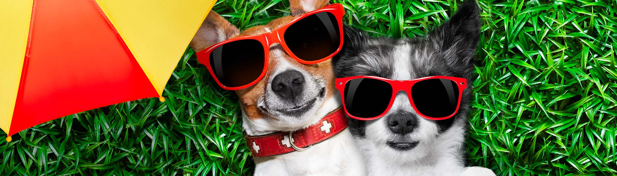 Pet Places - Summer Fun Dogs